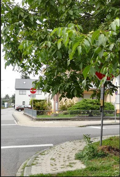 Rückschnitt von Büschen, Bäumen und Hecken an Gehwegen und Straßen
