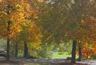 Herbstlaub - wohin damit