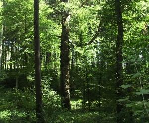 Erhöhte Waldbrandgefahr